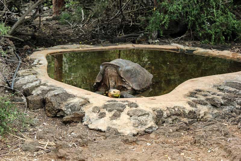 Santa Cruz: El Chato Tortoise Reserve Galapagos Island