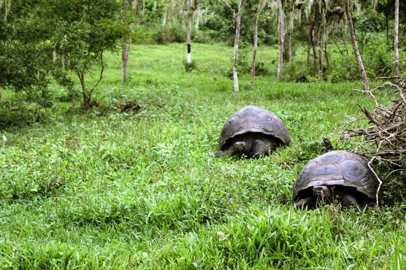 Santa Cruz: Highlands Galapagos Island
