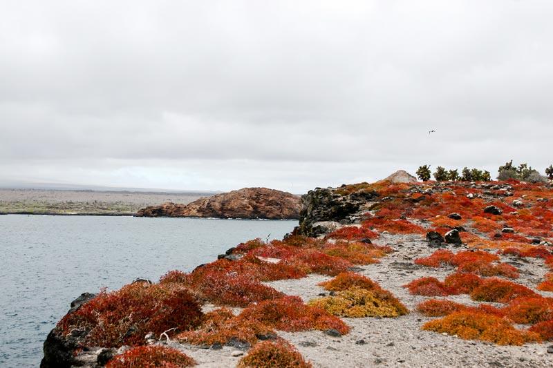 Santa Fe: South Plaza Galapagos Island