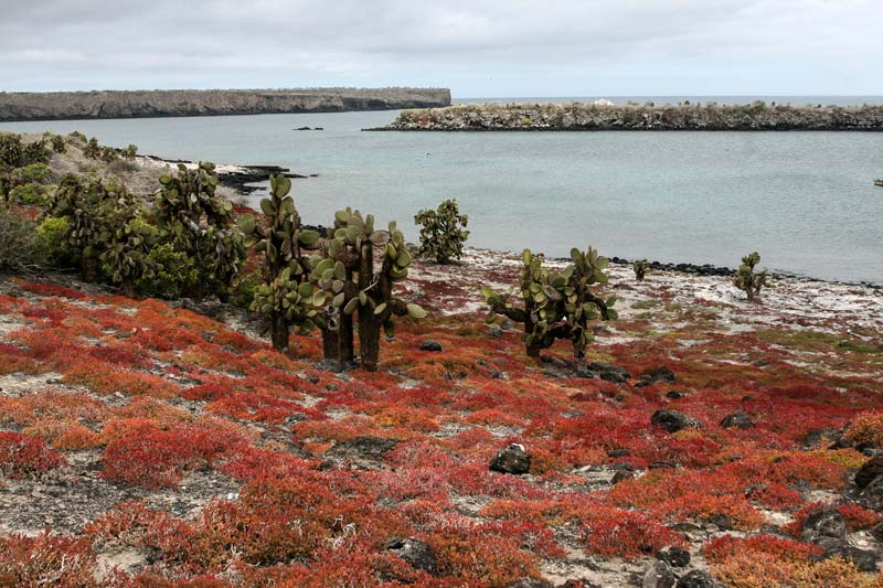 South Plaza Galapagos Island
