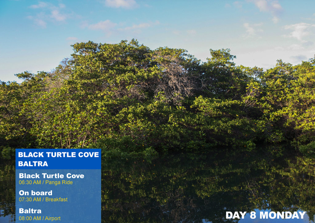 Nemo I Galapagos Cruises Itinerary B Eighth Day Monday AM Black Turtle Cove AM Baltra