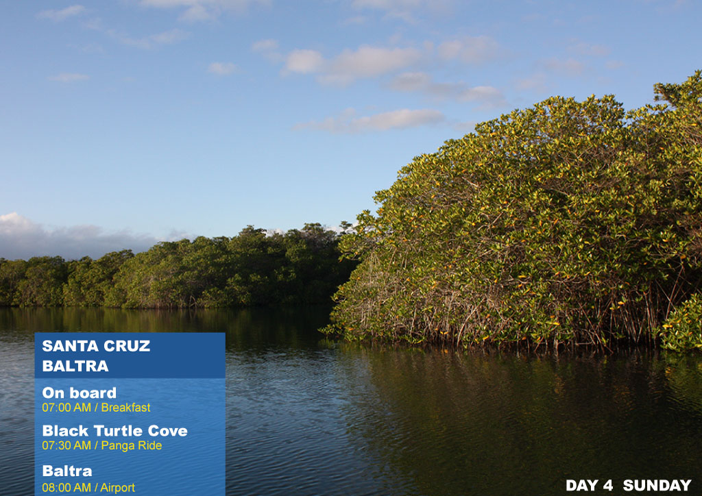 Nemo II Galapagos Cruises Itinerary South 4 Days Fourth Day Sunday AM Black Turtle Cove AM Baltra