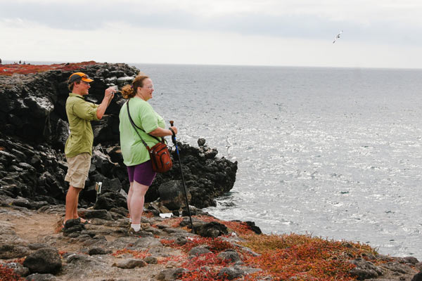 Looking for Birds Galapagos Island Travel
