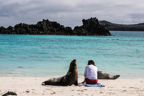 Sea Lion of Galapagos Island