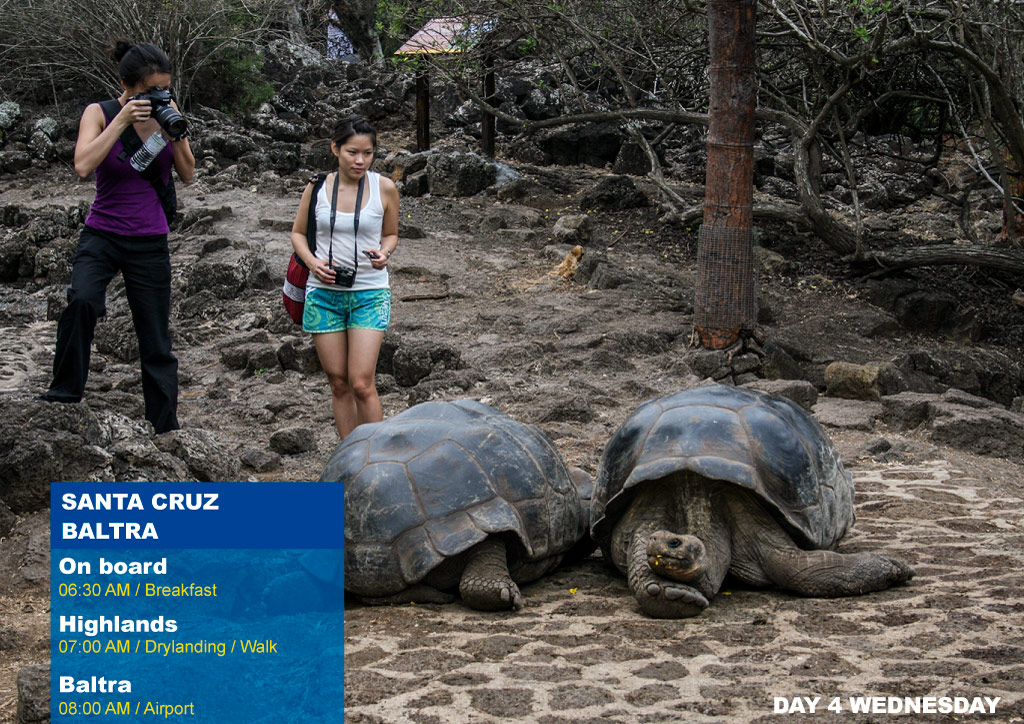 Nemo III Galapagos Cruises Itinerary North 4 Days - Fourth Day Wednesday-Santa Cruz AM Highlands PM Breeding Center Fausto Llerena