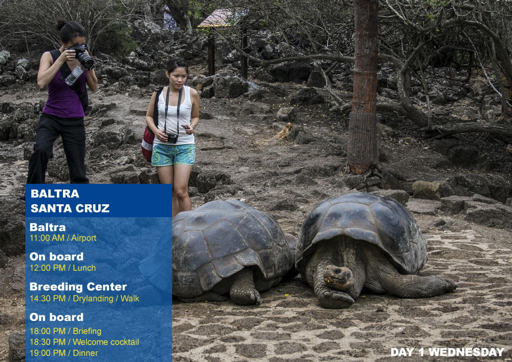 Nemo III Galapagos Cruises Itinerary North 5 Days - First Day Wednesday Santa Cruz AM Highlands PM Breeding Center Fausto Llerena