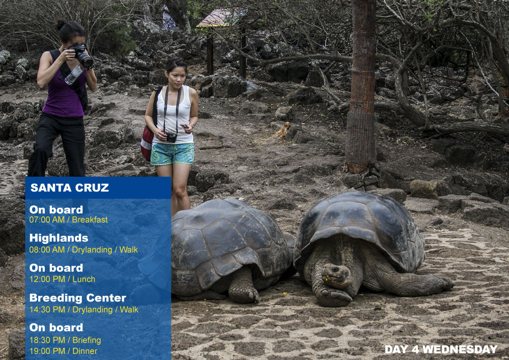 Nemo III Galapagos Cruises Itinerary North Fourth Day Wednesday-Santa Cruz AM Highlands PM Breeding Center Fausto Llerena