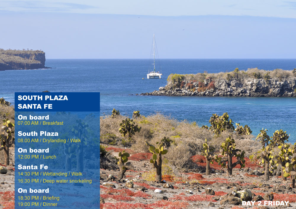 Nemo III Galapagos Cruises Itinerary South 4 Days - Second Day Friday AM South Plaza PM Santa Fe