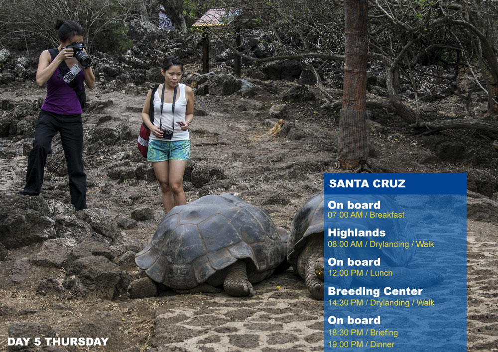 Nemo III Galapagos Cruises Itinerary South 8 Days - Fifth Day Thursday Santa Cruz AM Highlands PM Breeding Center Fausto Llerena