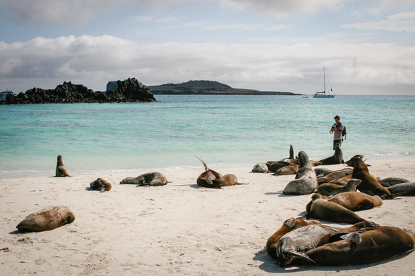 Beach, photos and little friends Galapagos Island