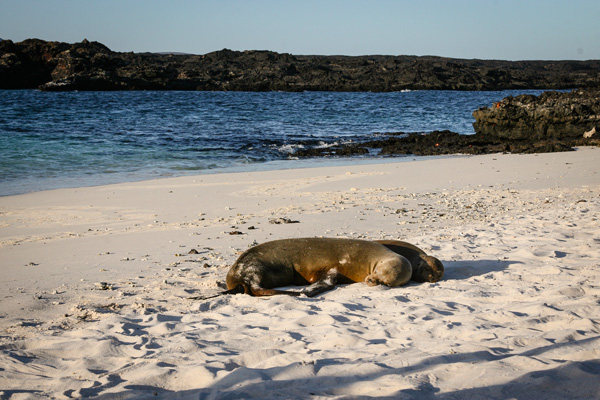 Resting in the white sand Galapagos Island