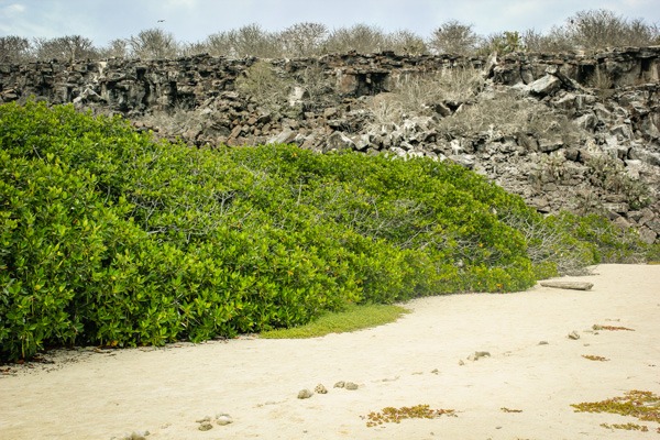 The green of the beach Galapagos Island