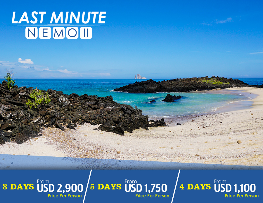 Last Minute Cruises >> Galapagos Cruises Last Minute Offers 2019 Nemo Galapagos Cruises