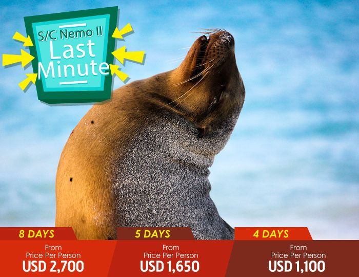 More Information Last Minute Offer About Travel Aboard The Nemo II Galapagos Cruises
