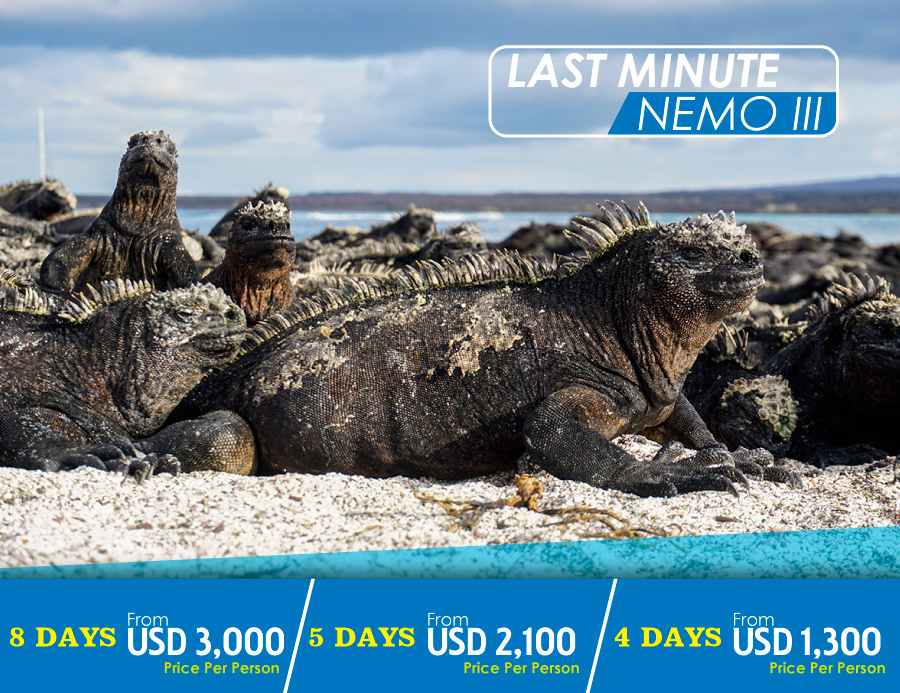 Galapagos Cruises Last Minute Offers 2019 - Nemo Galapagos Cruises