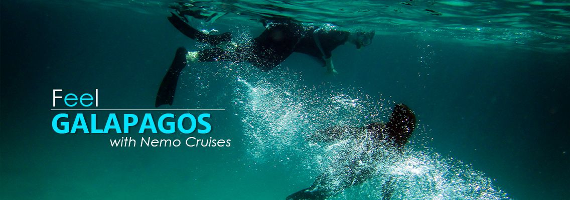 Welcome to Galapagos Cruises